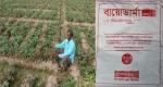 ক্ষেতলালে বালাই নাশক প্রয়োগে ১০ একর ফসল নষ্টের অভিযোগ